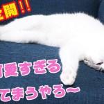 猫の可愛い寝姿に悶絶注意