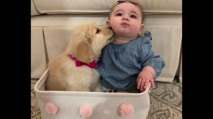 「最高におもしろ犬」 かわいいゴールデンレトリバー犬のハプニング, 失敗動画集