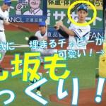 乙坂智もびっくり!斉藤明夫の完璧始球式!埋まるチャピーがかわいい!