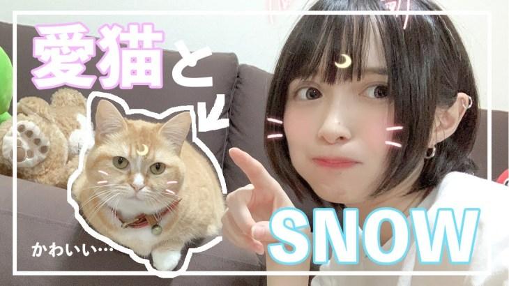 【かわいい】愛猫とSNOWをやってみたら可愛すぎて悶絶した