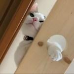 降りられないと訴える猫の鳴き声がかわいい