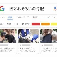 Google アプリ のCM 「寒い冬こそ」篇。「犬とおそろいの冬服」 「高タンパク低脂質の鍋レシピ」 「Google レンズ」