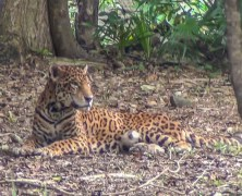 The beautiful animals of Xcaret