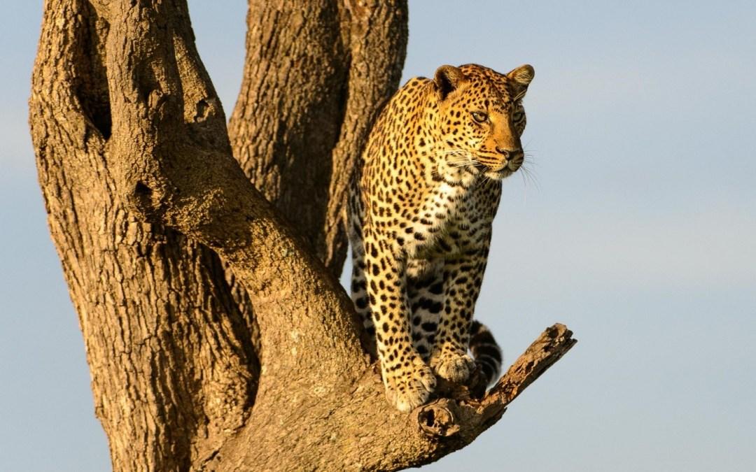 The Magic of an African Safari