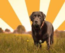 Xara Designer Pro 365 – a designer's best friend