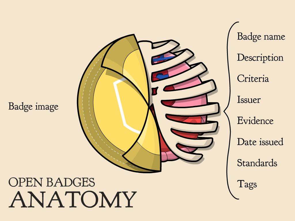 Badge anatomy
