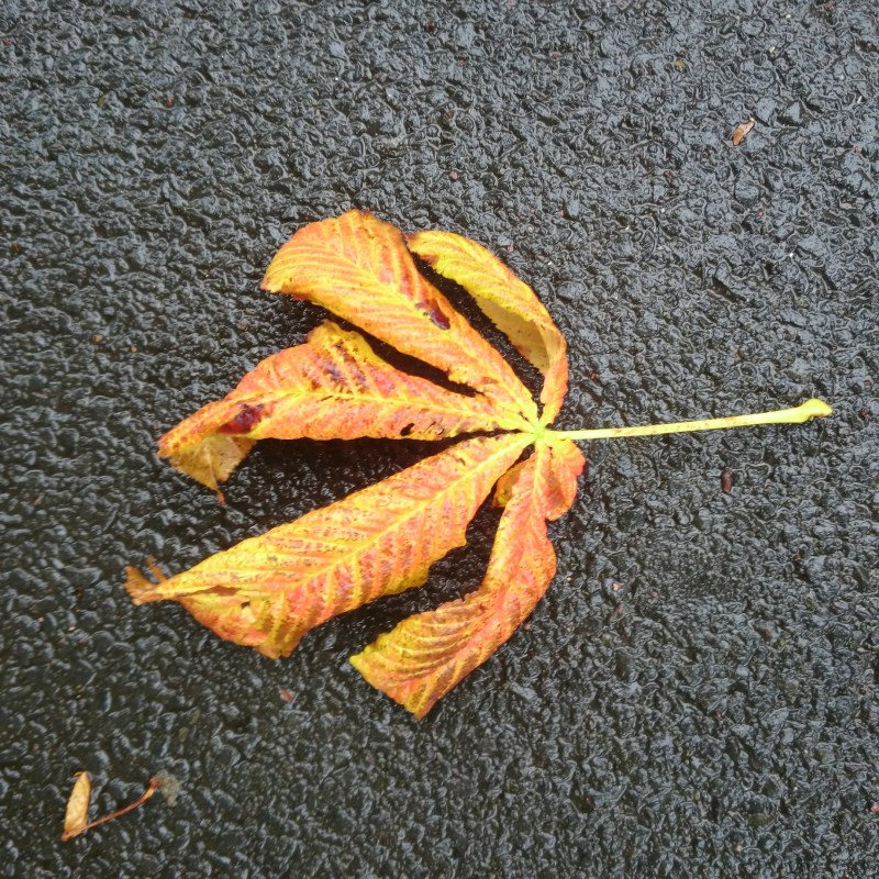 Autumn leaf
