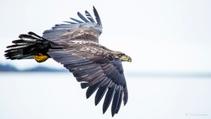 The Eagle, he was lord above