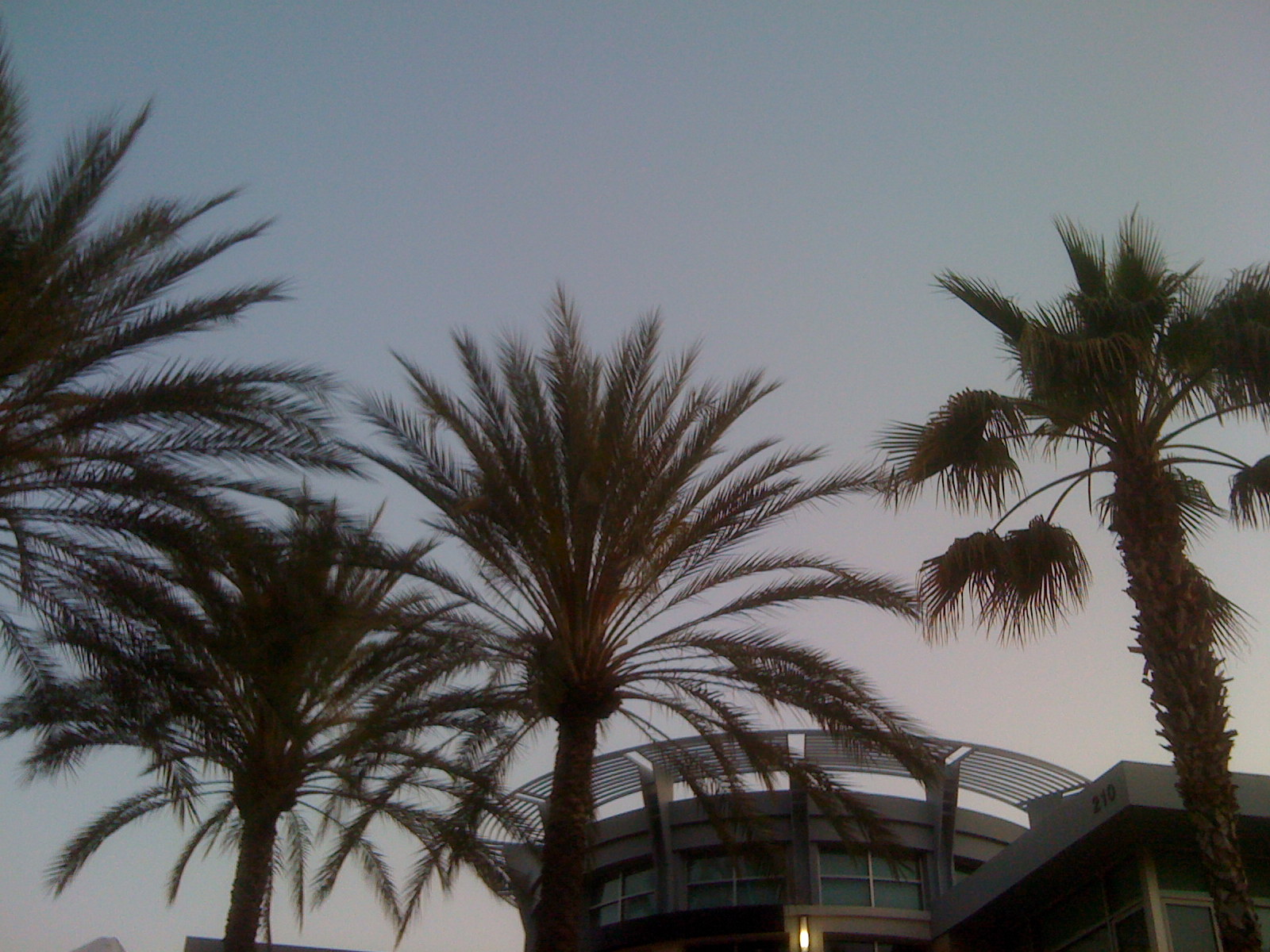 Palms on Birch Street?