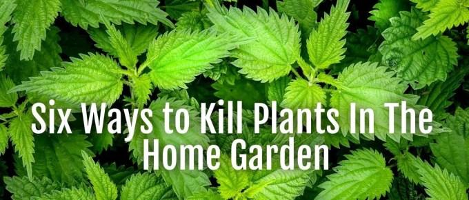 kill weeds