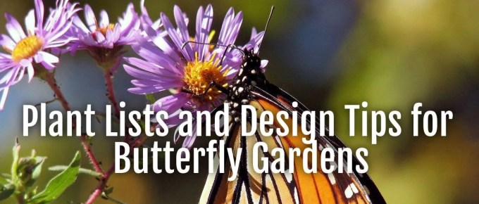 plant lists butterfly gardens
