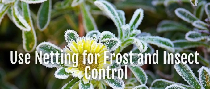 frost-insect-control