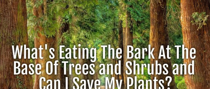 eating at the base of trees