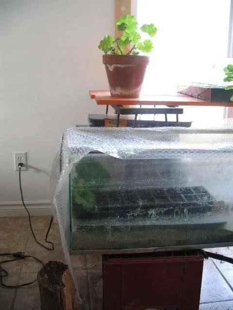 mini greenhouse made from aquarium