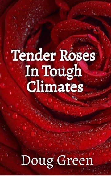 Tender Roses In Tough Climates