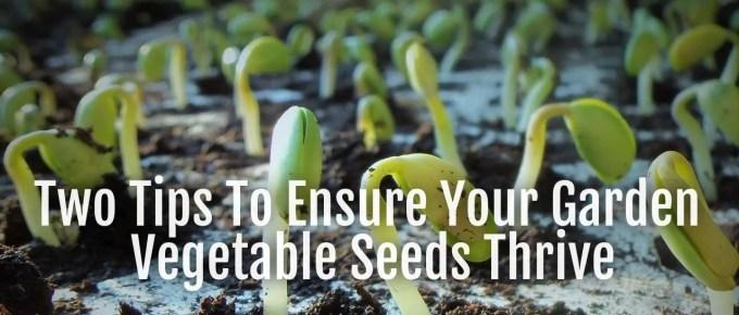 vegetable seeds thrive
