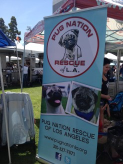 Pug Nation Rescue