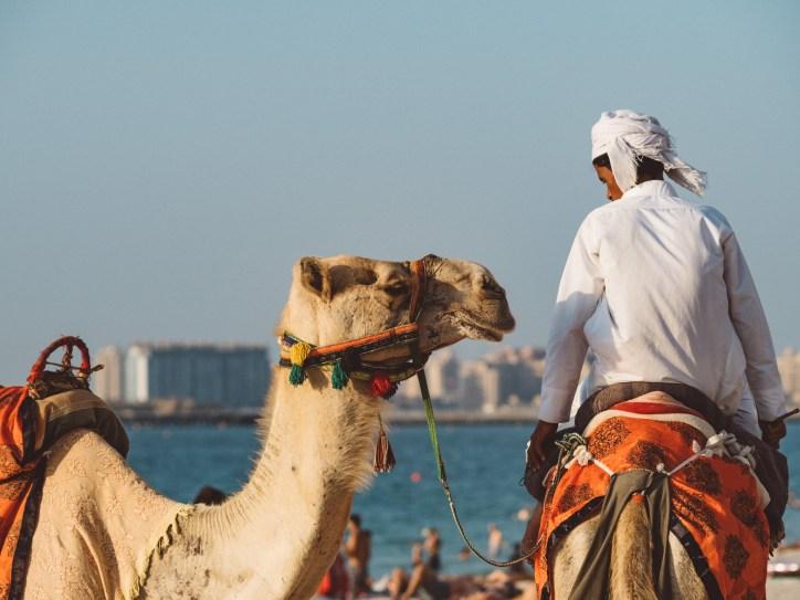 Camel rides Jumeirah beach, Dubai. Olympus 17mm f1.8 Street photography