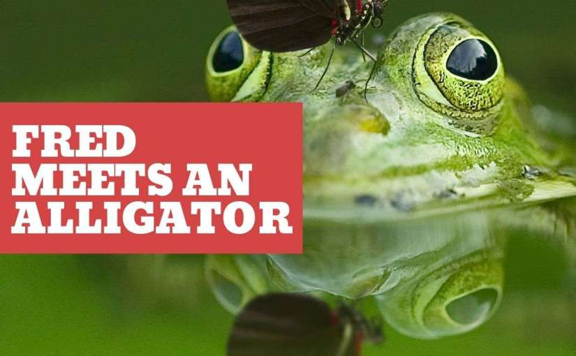 Fred the Frog Meets An Alligator