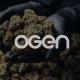 OGEN Bloom Cultivation