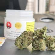Gather (Jack Herer) by Solei