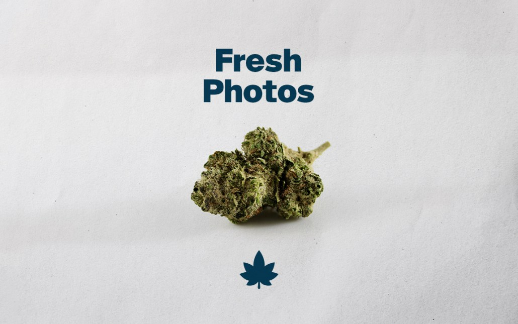 Douglasdale Cannabis Fresh Photos