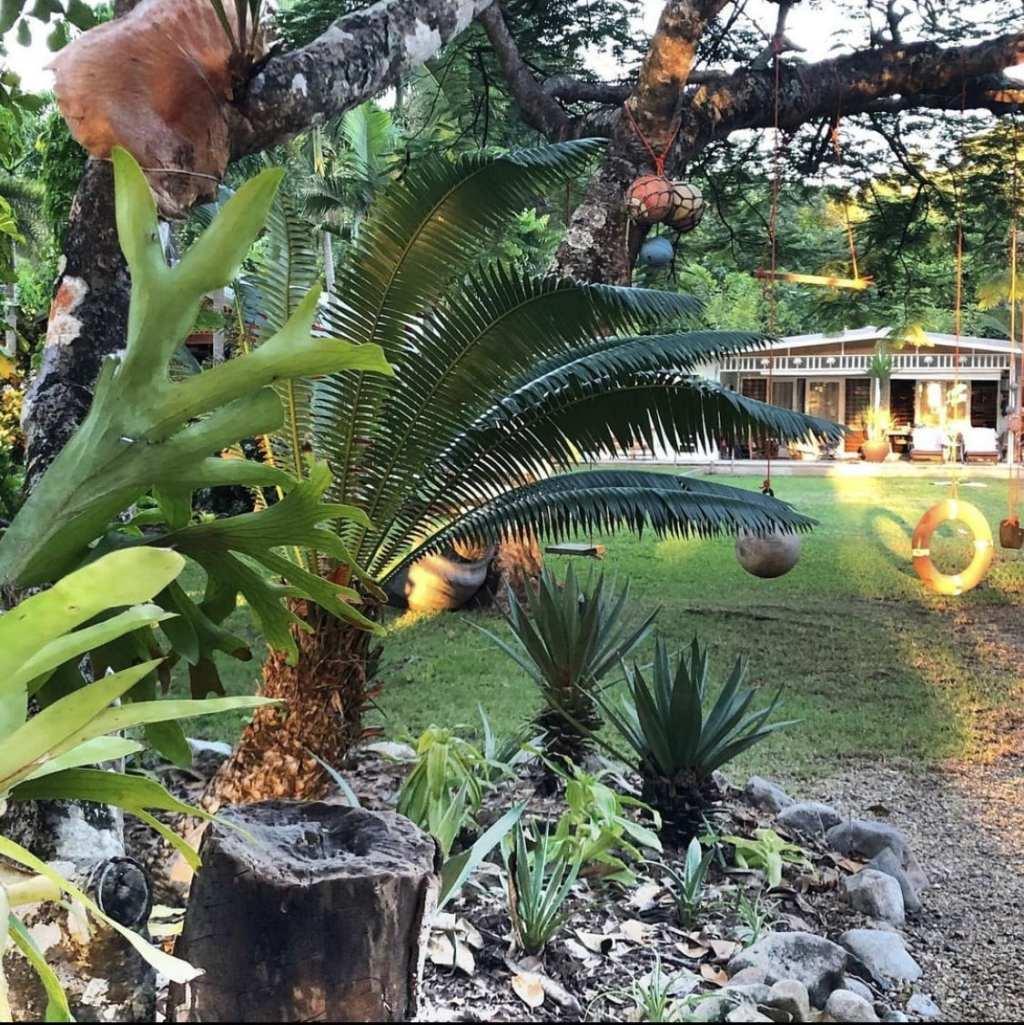 artist houses wonga beach
