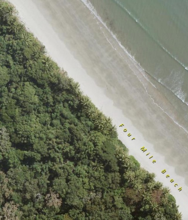 Erosion undermining and washing away trees in the littoral rainforest on a section of the beach from the mouth of the Mowbray River to Yule Point.