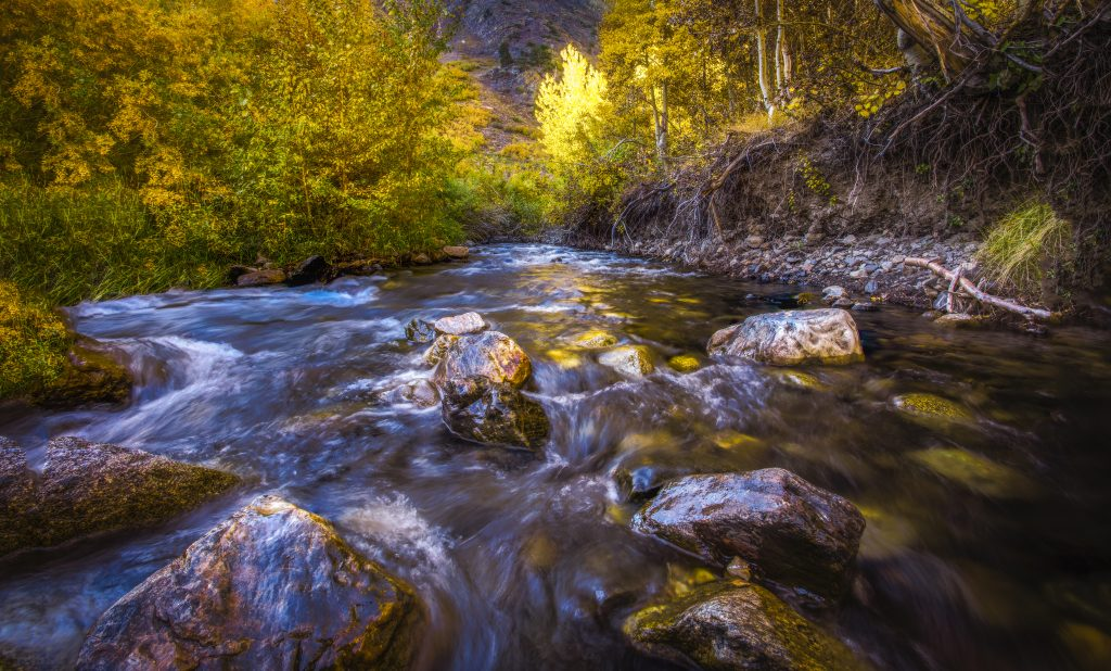 McGee Creek Gold Rush