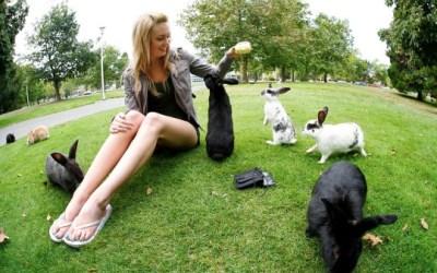 Maclean's to university applicants: Victoria has best school, 2nd worst crime
