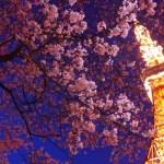 東京夜桜デートスポット