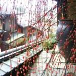 正月 紅白 餅 枝