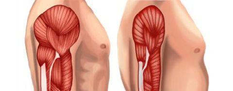Perda Muscular Andropausa Tratamento Modulação Hormonal Bioidêntica