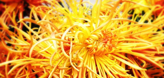 Body Mechanix flower