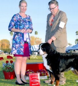 DrB, Veterinarian,AKC Dog Show,Costa Mesa