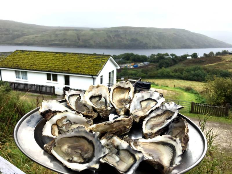 The Oyster shed ostriche su skye