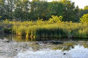 Franklin Pond Cambridge Ontario