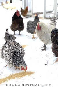 Keep your hens laying through winter