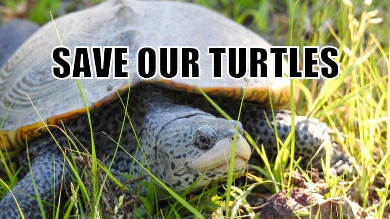 margate turtle causeway