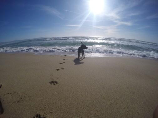 Marina Dunes Preserve.