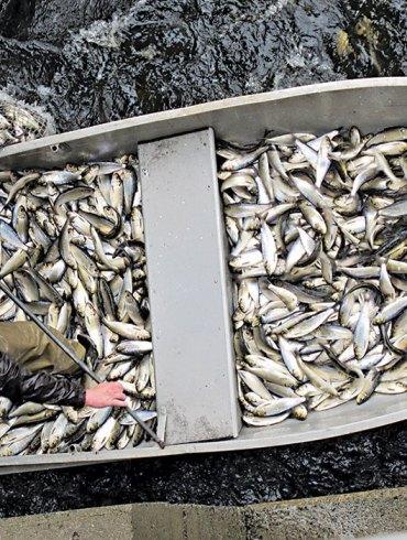 Boat full of fish