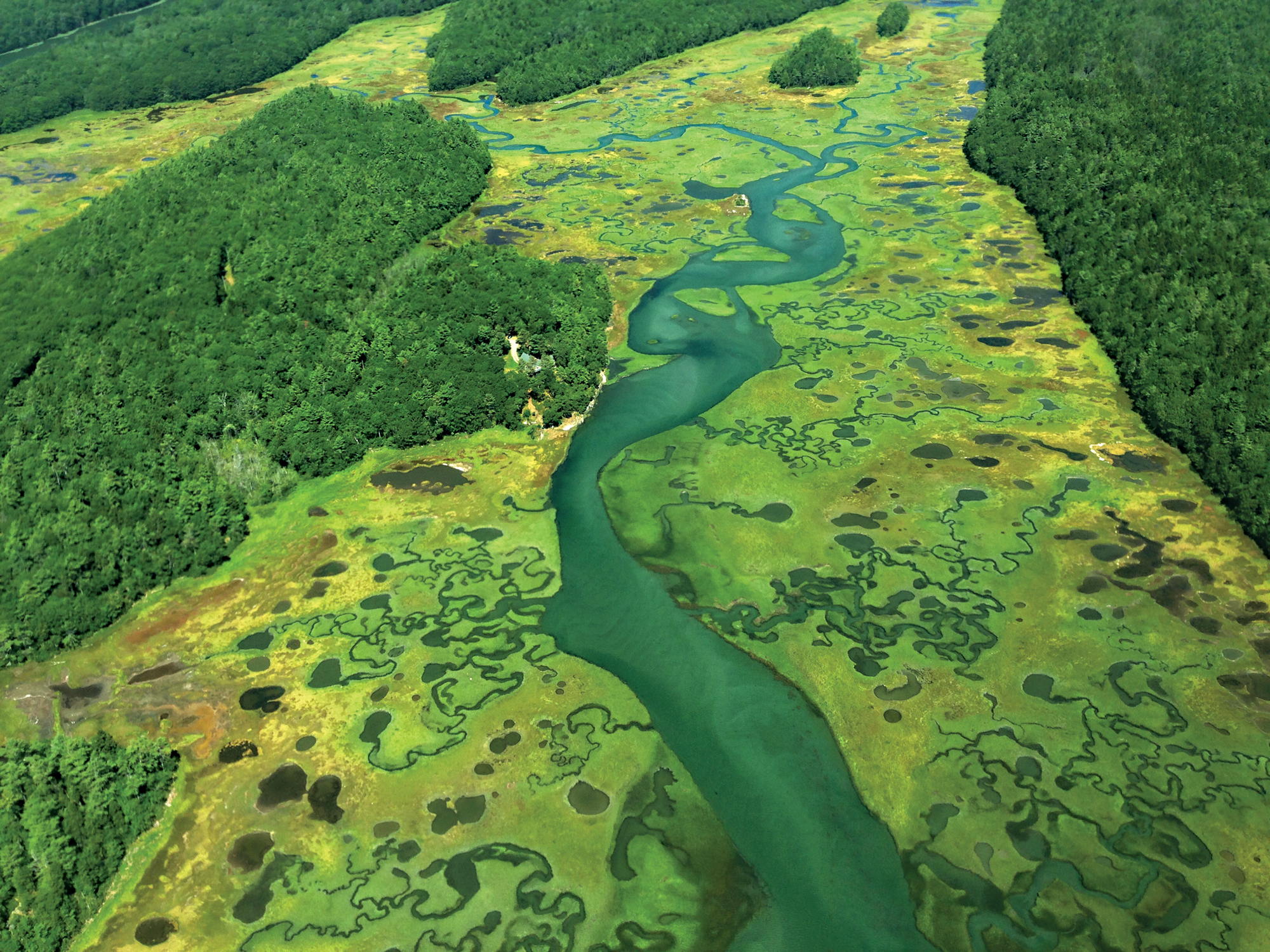kdb's Wilderland project grew to include aerial surveys of the region, which contains more than 20 percent of Maine's tidal marshes.