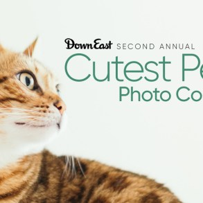 Second annual Cutest Pets Photo Contest