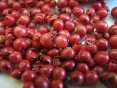 cultiver des baies de goji
