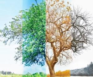 Eternity Comes in Seasons