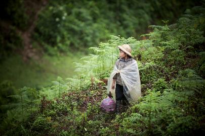 Primary Education in Viet Nam