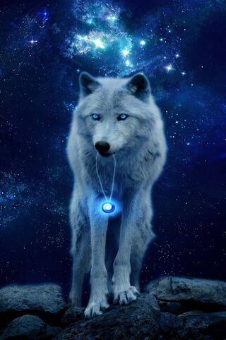 loup blanc fond d ecran telecharger
