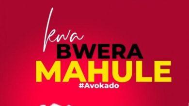 Avokado – Kwa Bwela Mahule