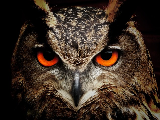 owl-bird-eyes-eagle-owl-86596-1.jpeg