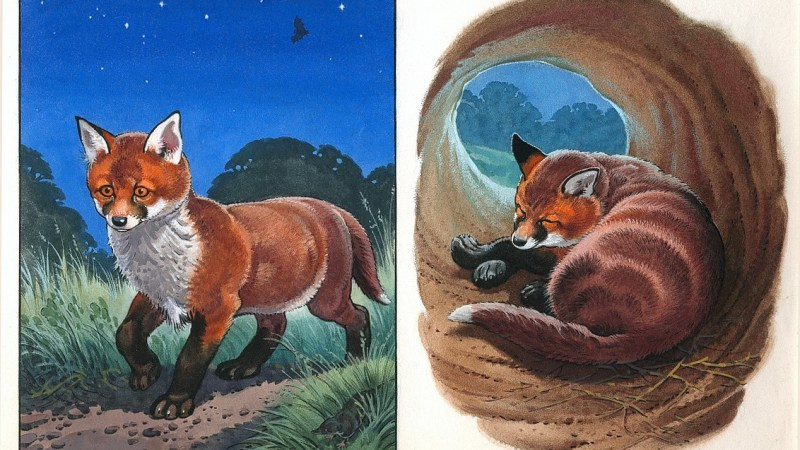 """Marney the Fox: after Buster, a """"Sunny"""" star, thanks to Bernard Long"""